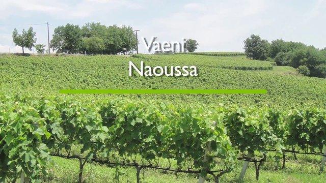 Vaeni Naoussa – Griechischer Wein
