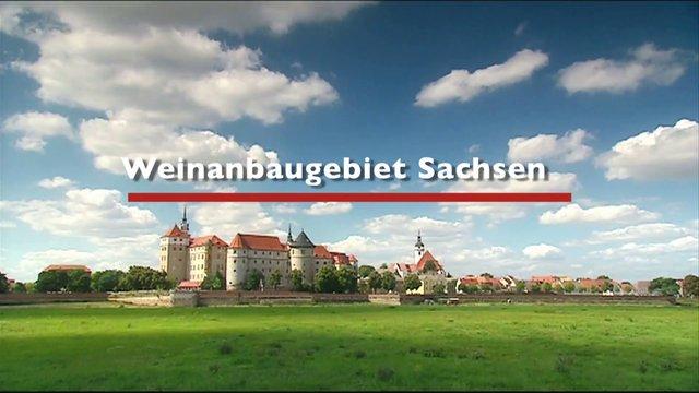 The wine-growing region of Saxony