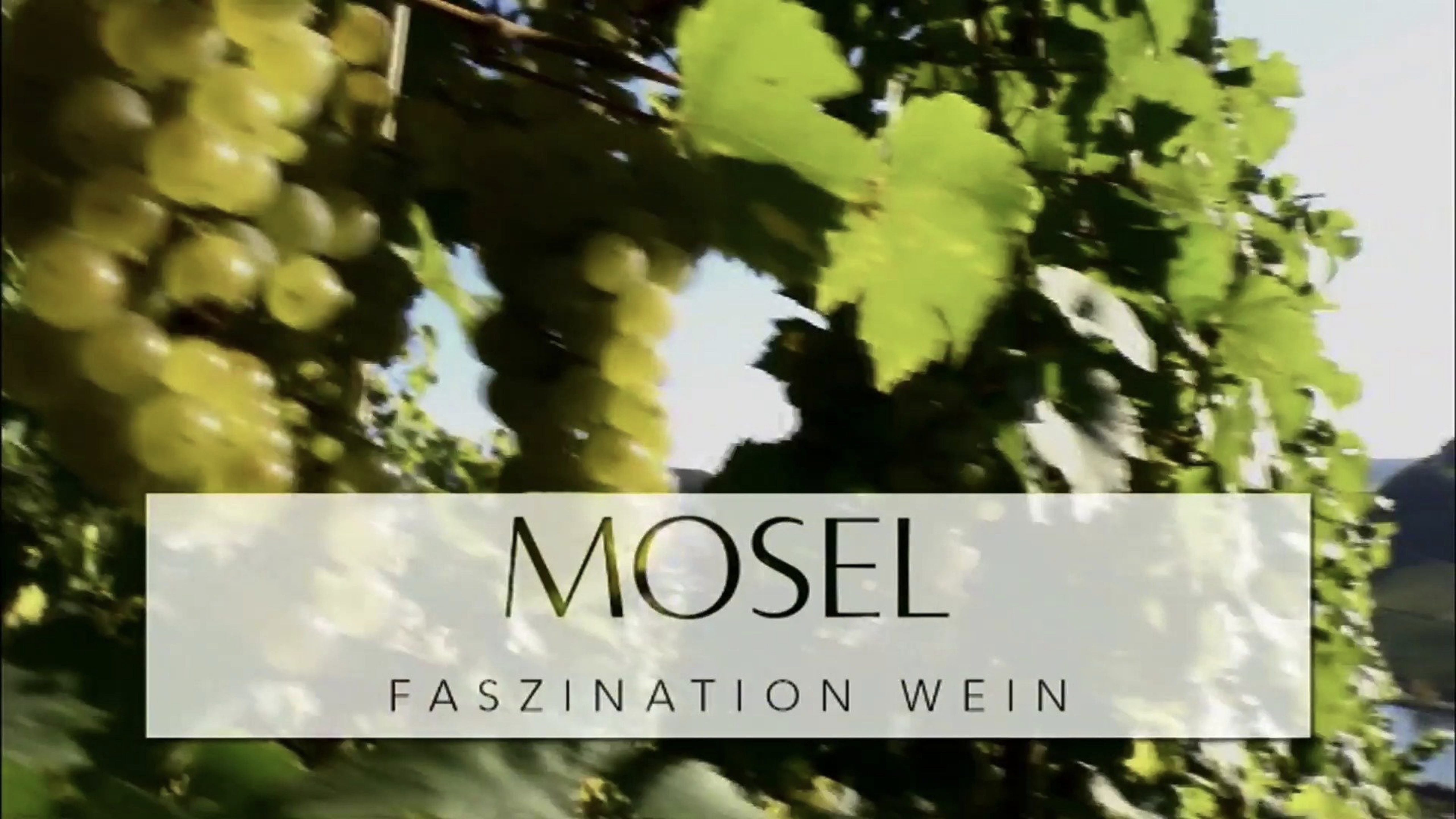 The southern Weinmosel