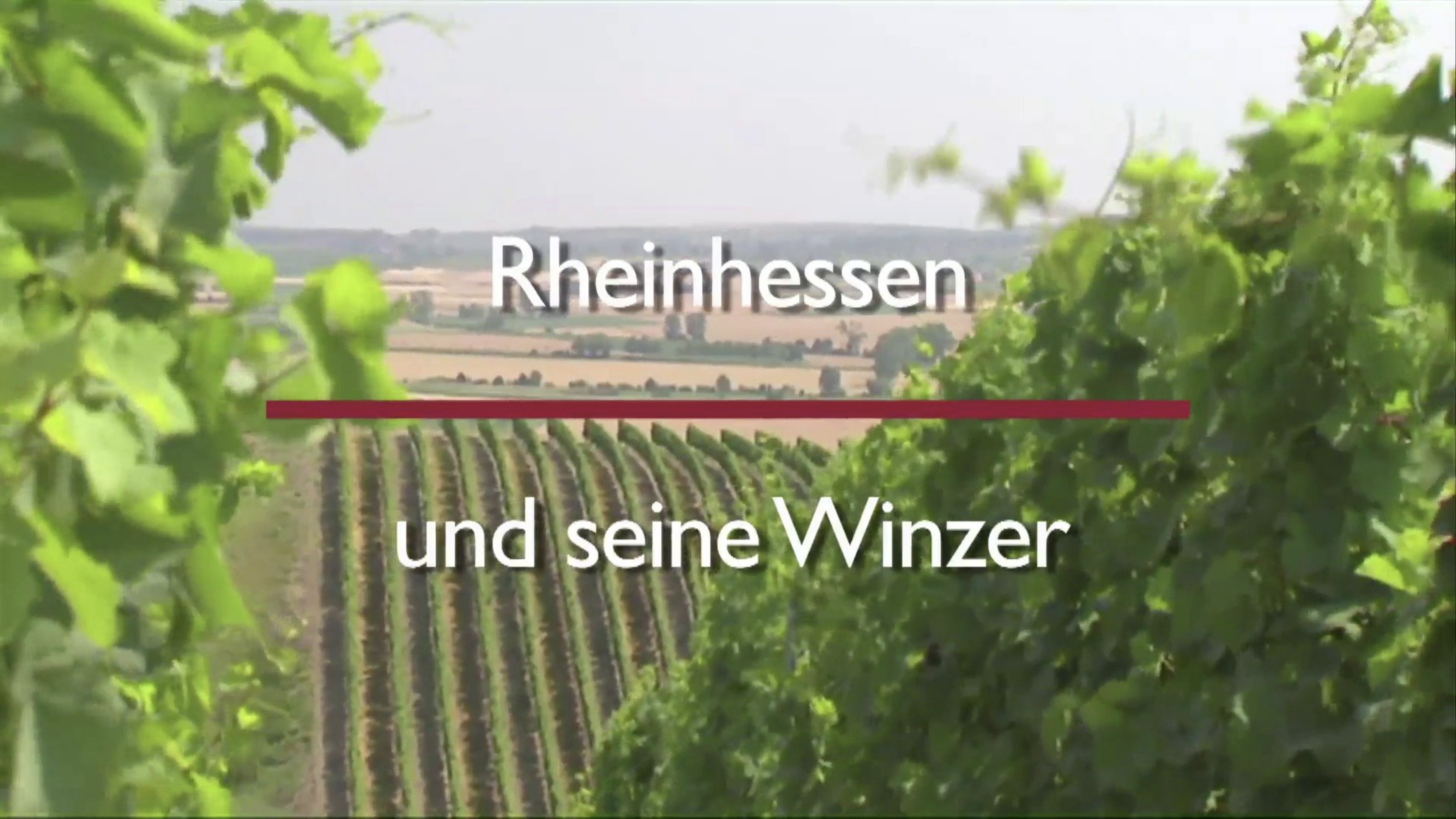 The wine-growing region of Rheinhessen