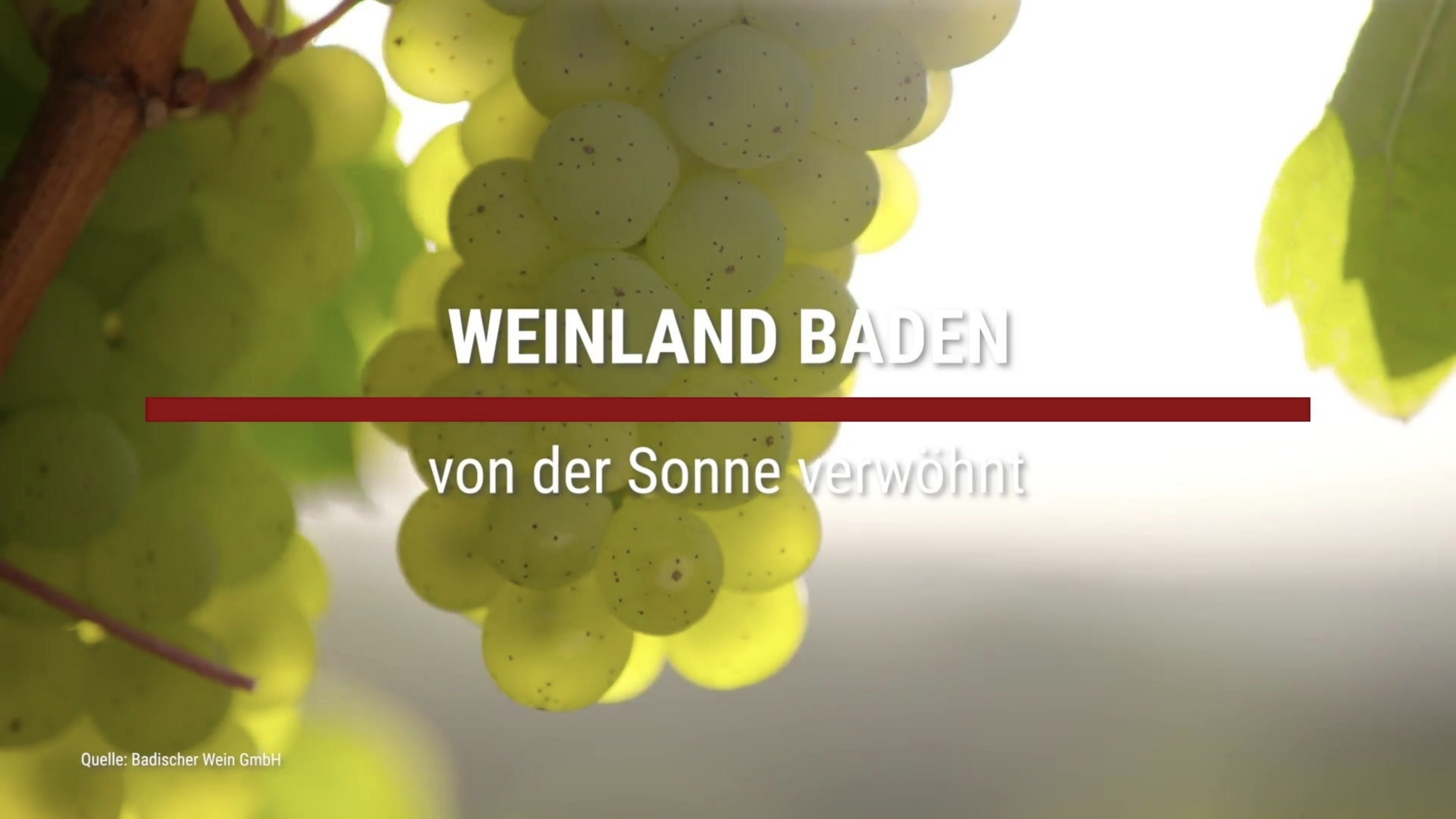 Das Weinland Baden – Von der Sonne verwöhnt