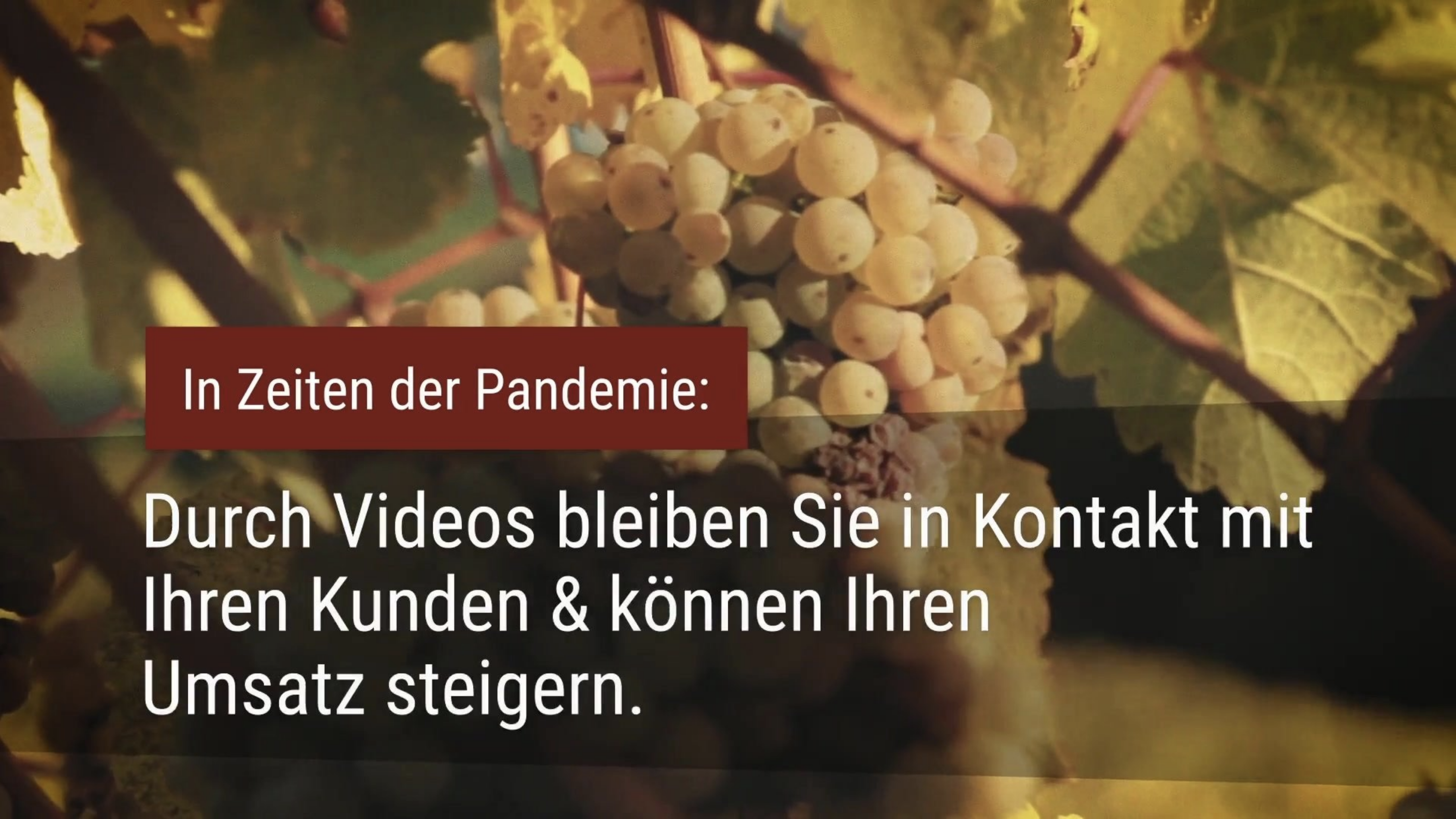 Winemakers in times of the pandemic