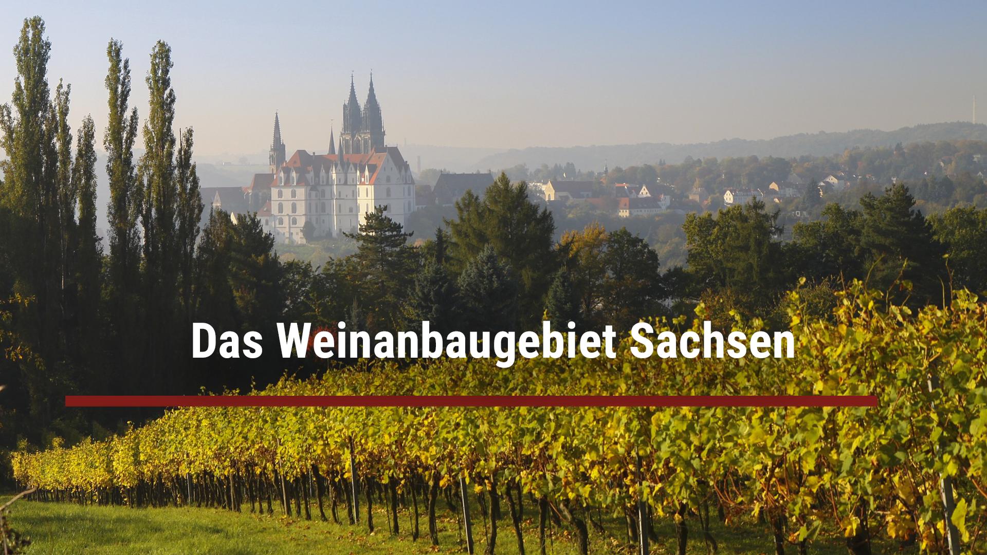 Das Weinanbaugebiet Sachsen