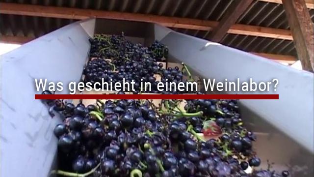 Was geschieht in einem Weinlabor?